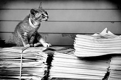 Kitty on a pile of newspapers - from Brit Randolph on Flickr